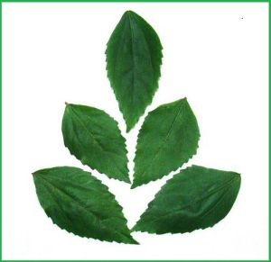 LeafGanesha